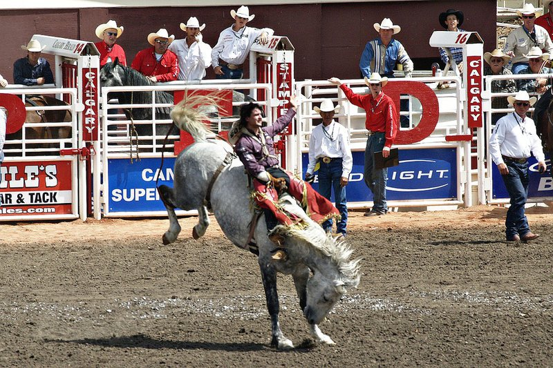 Calgary stampede horse rider kick downtown events summer event attraction.jpg