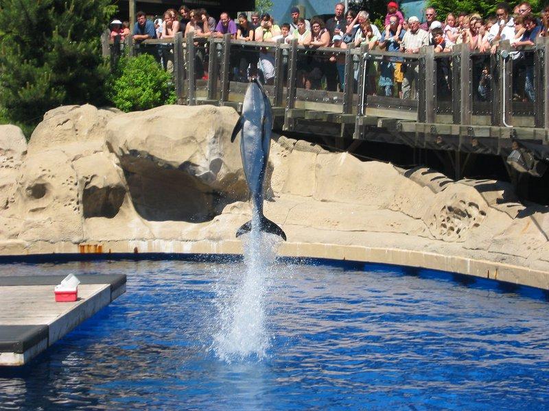 vancouver dolphin jump seaworld amusement park community downtown.jpg